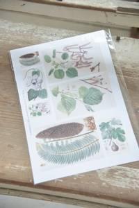 Bilde av Ark botanikk